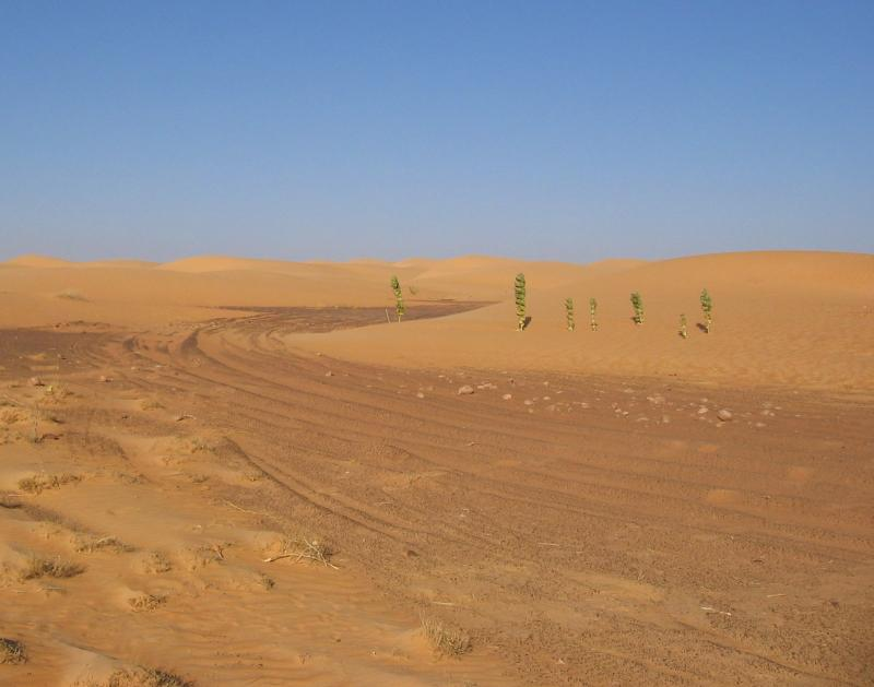 Dakar_traces_mauritanie