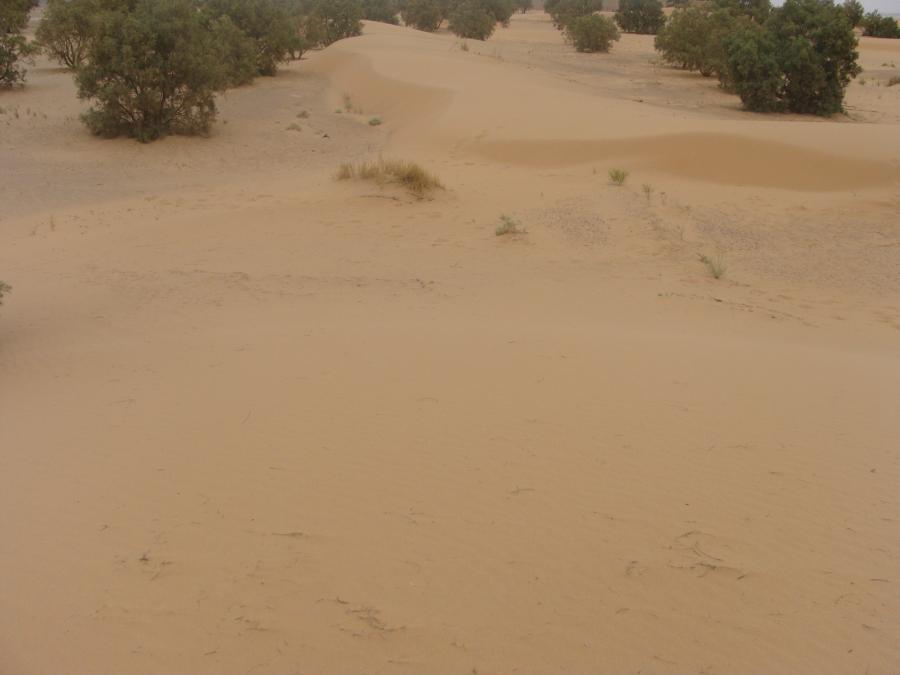 Prachové duny na okraji poľa