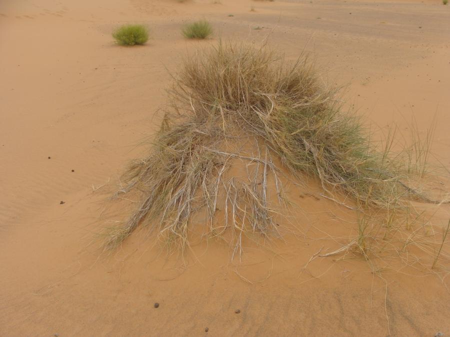 POVRCHY SAHARY I. – piesky a podobné oné